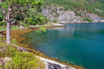 Norwegian wild nature in summer season