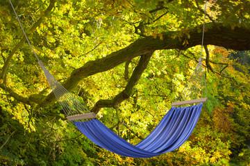 Hängematte am Baum im Herbst
