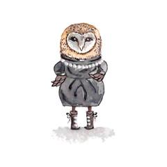 Cartoon owl concept design. Bird are isolated on white