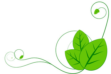 Green leaf and creeping plant