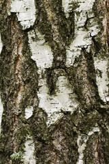 bark on the white background