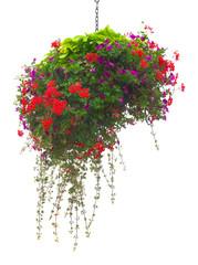 Freigestellte Blumenampel in leuchtenden Farben