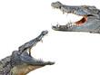 crocodil and crocodile