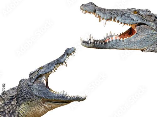 Foto op Aluminium Krokodil crocodil and crocodile