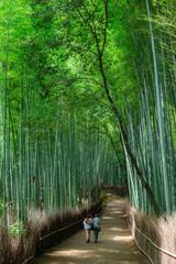 京都 嵯峨野 Kyoto Japan