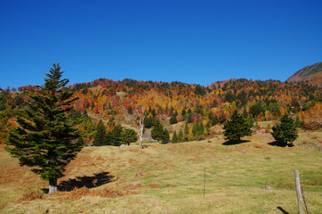 秋の風景 山田牧場