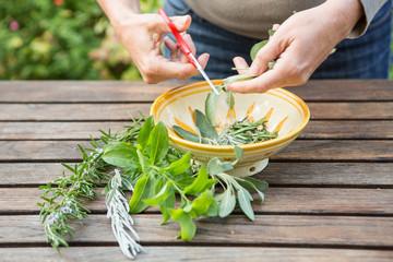 coupe plantes aromatiques