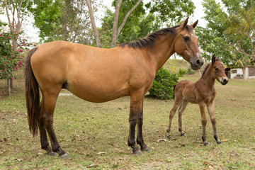 mare and a foal