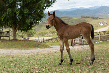 A Mexical foal in the countryside