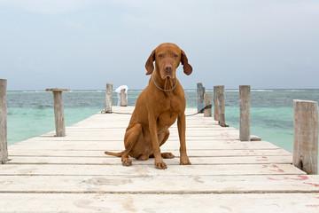 dog sitting on pier in Mayan Riviera,Yucatan,Mexico