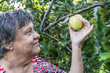 a woman picking apple from tree