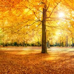 Großer Baum im Herbstwald