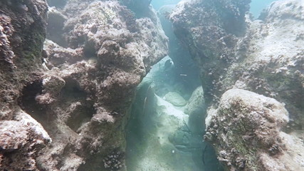 Floating between two rocks on the ocean floor