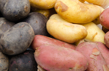 Different varieties of potatoes