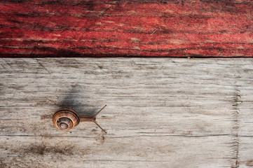 snail crawling across wood plank
