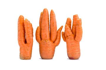 Unusual crop of carrots
