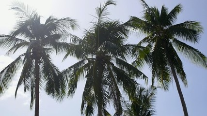 Palms at Wind During Sunny Day. Thailand Beach.