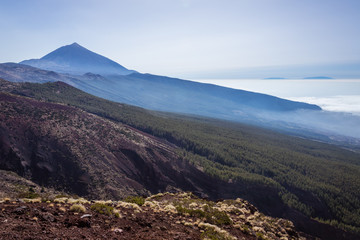 Teide national park. Tenerife