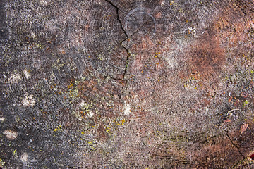 Texture of the old raw wood
