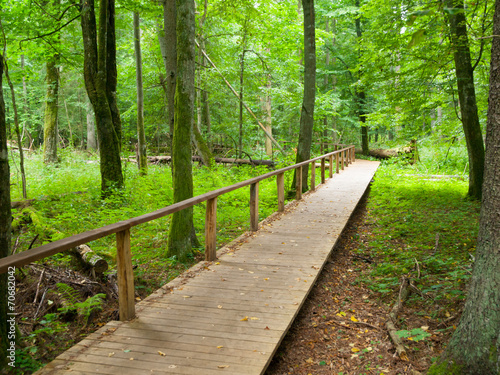 Wooden path - 70682042