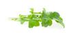 The Copy of Rugula Green