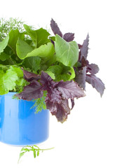Blue Cup with Greens for Salad