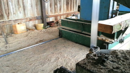Pine Wood Trimming with Bandsaw at Sawmill