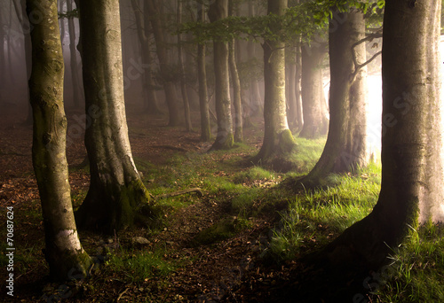 Staande foto Bossen Magic forest