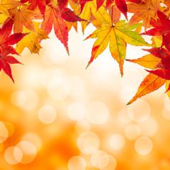 Herbstblätter vor farbigem Hintergrund