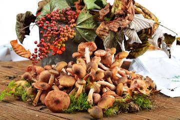 funghi chiodini autunnali