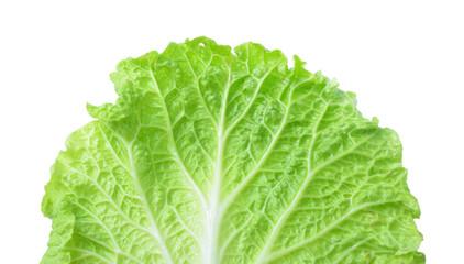Fresh Lettuce / one leaf isolated on white background