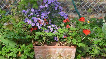 jardin...fleurs