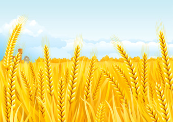 Vector fall landscape of  Grain fields with house