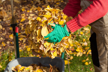 Man cleaning garden from leaves