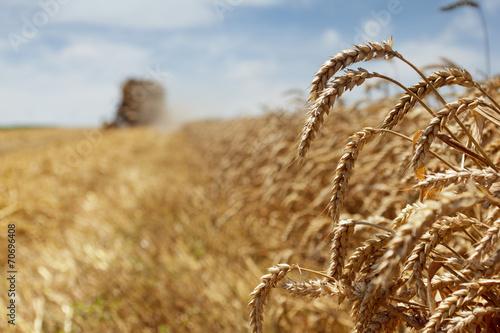 Fotobehang Cultuur Wheat harvest