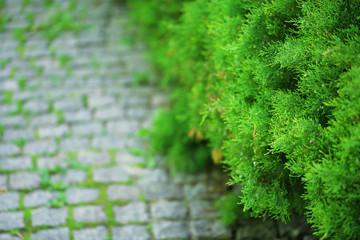Stone walkway in green park