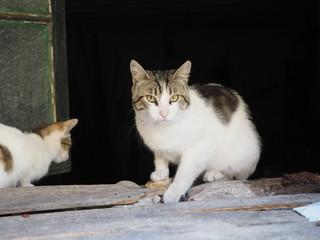 Gatos en una ventana
