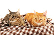 canvas print picture - Red and grey cats on blanket isolated on white