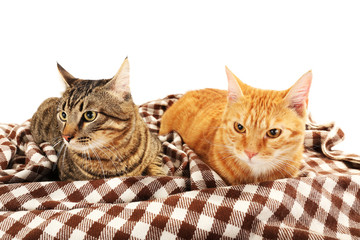 Red and grey cats on blanket isolated on white