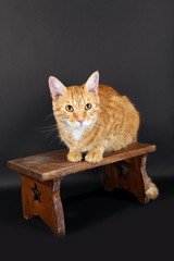 Red cat on wooden stool on dark background