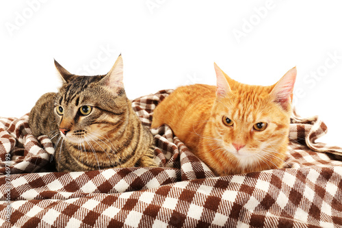 canvas print picture Red and grey cats on blanket isolated on white