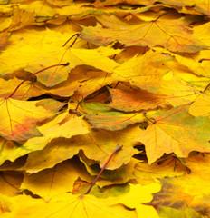 autumn leave.
