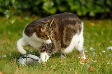 Katze mit Taube