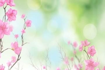 среди  цветов
