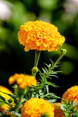 A beautiful yellow flower in a garden