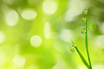 Bright spring background with a blade of grass with drops of dew