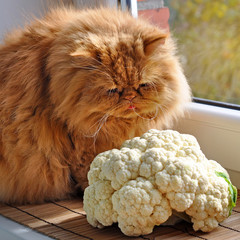 Red cat sitting on the windowsill near the cauliflower orchard a