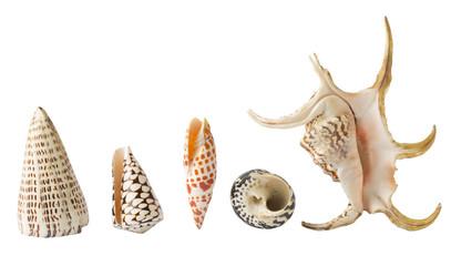Diversi tipi di conchiglie