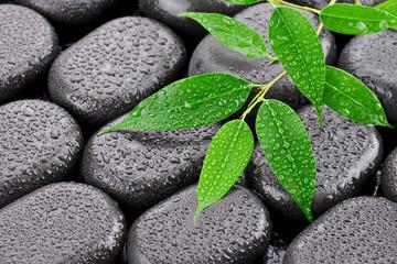 Mokre liście na kamieniach bazaltowych