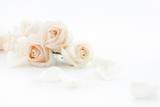white roses and petals - 70710648